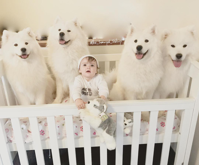 Gia đình nổi như cồn trên mạng xã hội với loạt ảnh chụp hai chị em và cả đàn chó cưng trắng như tuyết - Ảnh 13.
