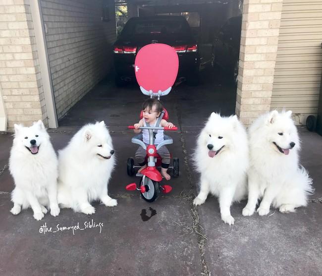 Gia đình nổi như cồn trên mạng xã hội với loạt ảnh chụp hai chị em và cả đàn chó cưng trắng như tuyết - Ảnh 14.