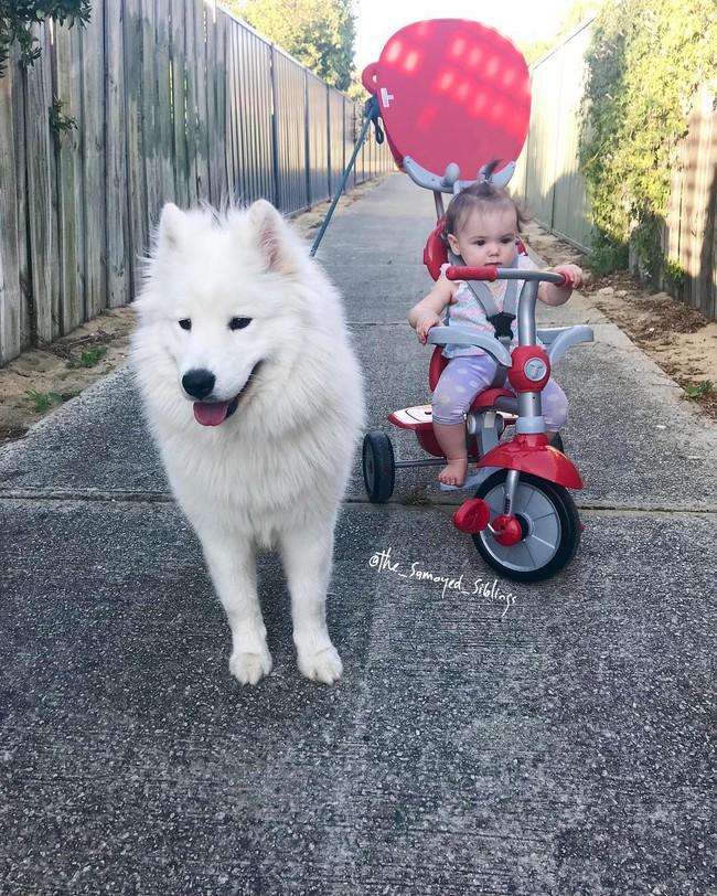 Gia đình nổi như cồn trên mạng xã hội với loạt ảnh chụp hai chị em và cả đàn chó cưng trắng như tuyết - Ảnh 15.