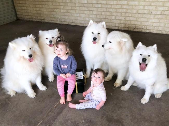 Gia đình nổi như cồn trên mạng xã hội với loạt ảnh chụp hai chị em và cả đàn chó cưng trắng như tuyết - Ảnh 3.