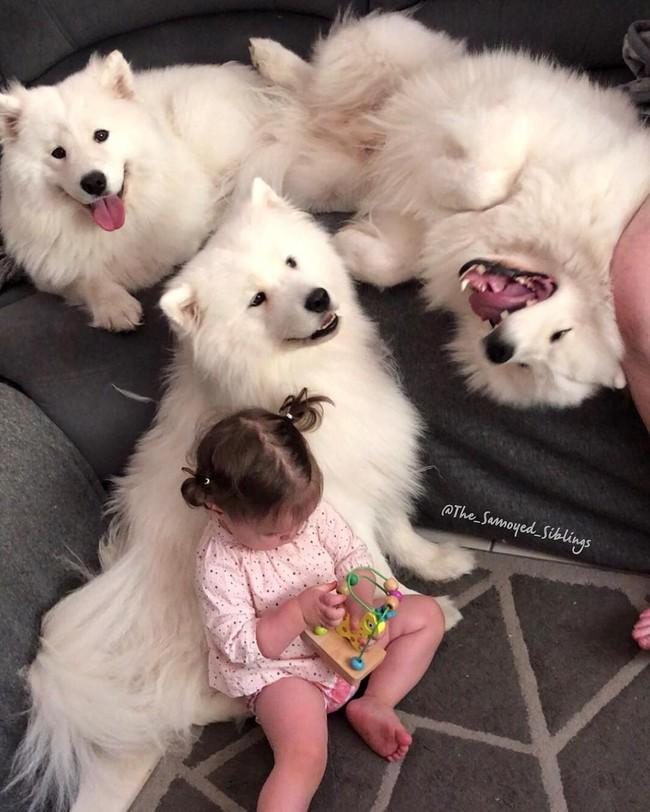 Gia đình nổi như cồn trên mạng xã hội với loạt ảnh chụp hai chị em và cả đàn chó cưng trắng như tuyết - Ảnh 6.