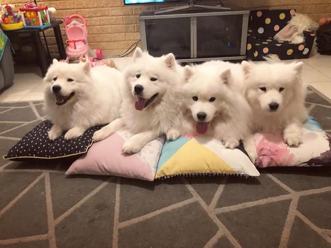Gia đình nổi như cồn trên mạng xã hội với loạt ảnh chụp hai chị em và cả đàn chó cưng trắng như tuyết - Ảnh 20.