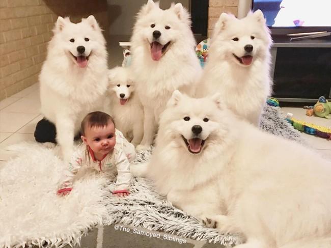 Gia đình nổi như cồn trên mạng xã hội với loạt ảnh chụp hai chị em và cả đàn chó cưng trắng như tuyết - Ảnh 8.
