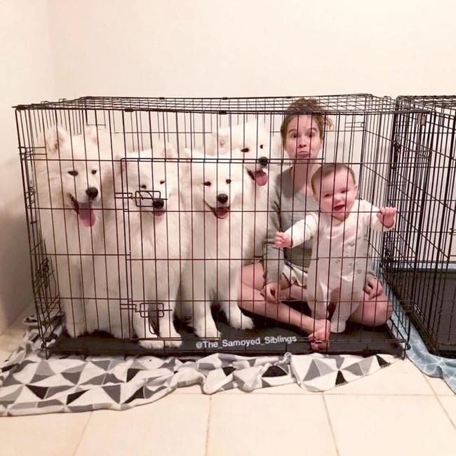 Gia đình nổi như cồn trên mạng xã hội với loạt ảnh chụp hai chị em và cả đàn chó cưng trắng như tuyết - Ảnh 10.
