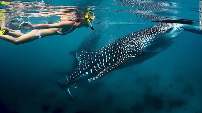 Việc nhẹ lương cực cao: Sống ở resort sang chảnh, bơi cùng cá mập, chơi dù lượn để nhận ngay 2,8 tỉ đồng - Ảnh 3.