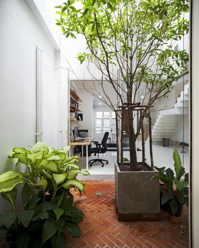 Ngôi nhà ống an yên với khu vườn bonsai khiến ai nhìn cũng ước ao - Ảnh 12.