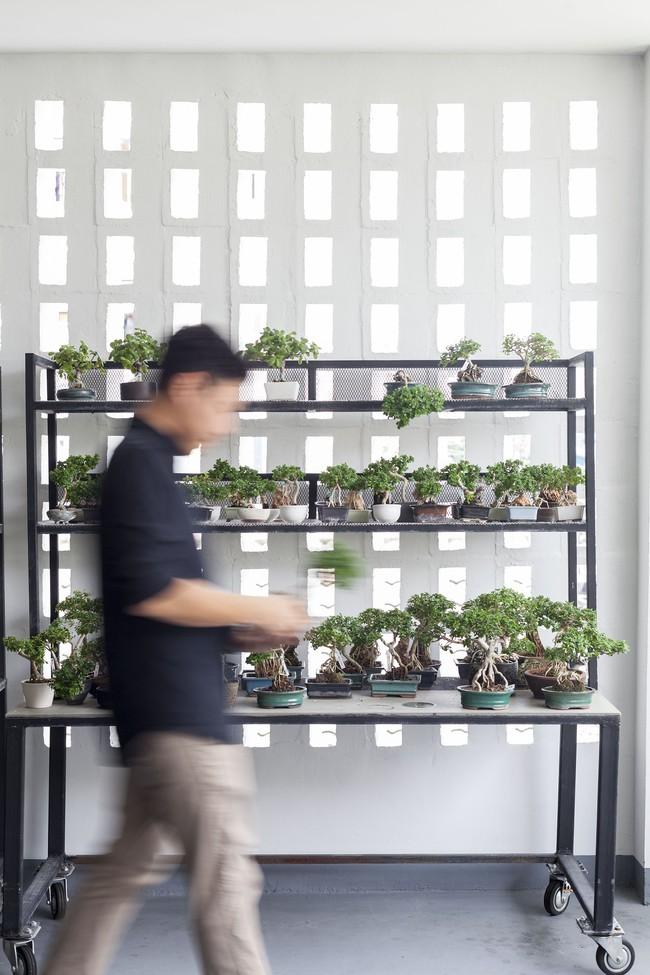 Ngôi nhà ống an yên với khu vườn bonsai khiến ai nhìn cũng ước ao - Ảnh 15.