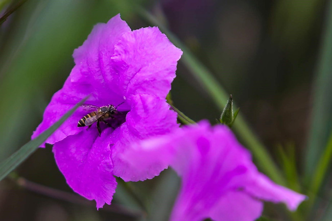 Người Hà Nội thích thú với con đường hoa chiều tím dài hơn 1km vô cùng thơ mộng ven sông Tô Lịch - Ảnh 11.