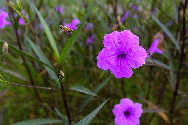 Người Hà Nội thích thú với con đường hoa chiều tím dài hơn 1km vô cùng thơ mộng ven sông Tô Lịch - Ảnh 12.