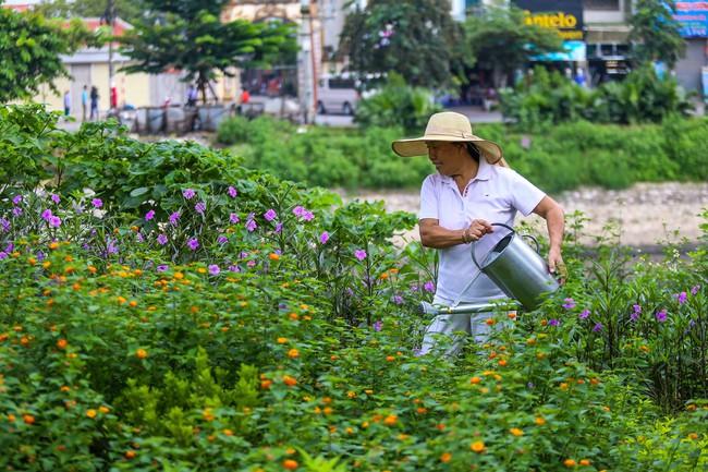 Người Hà Nội thích thú với con đường hoa chiều tím dài hơn 1km vô cùng thơ mộng ven sông Tô Lịch - Ảnh 6.