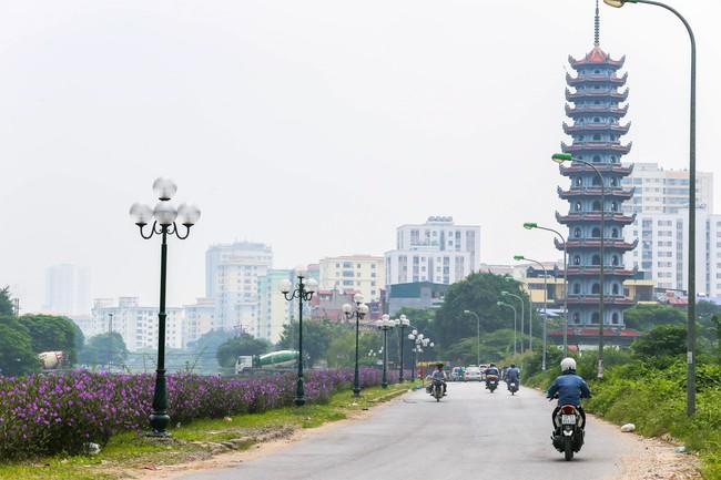 Người Hà Nội thích thú với con đường hoa chiều tím dài hơn 1km vô cùng thơ mộng ven sông Tô Lịch - Ảnh 1.