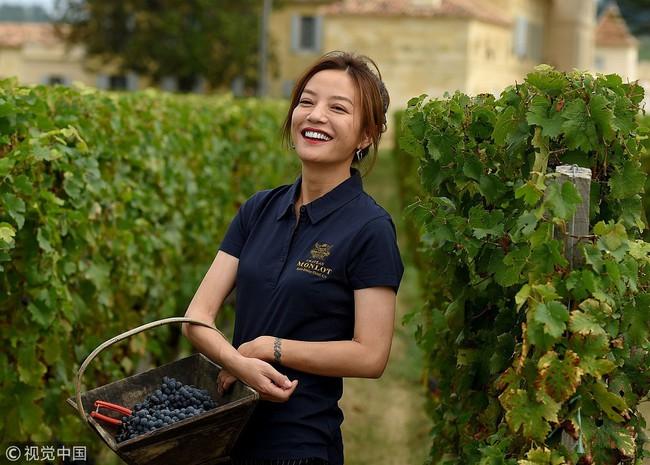 Én nhỏ Triệu Vy xinh đẹp tự tay thu hoạch nho trong khu vườn rộng 7ha của gia đình - Ảnh 7.