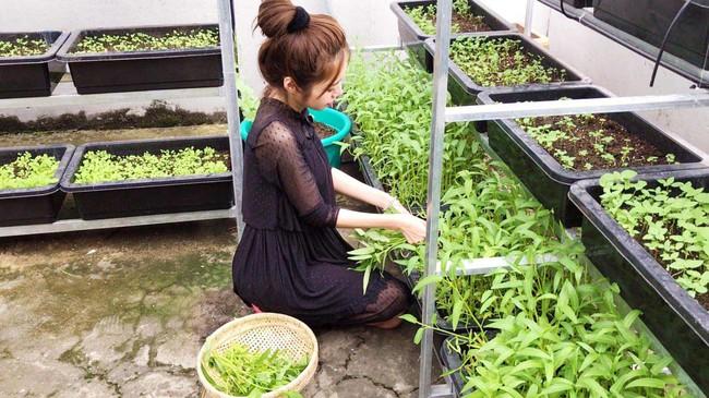 Khu vườn trên sân thượng nhỏ nhắn nhưng xanh mát mắt của bà mẹ hai con xinh đẹp Elly Trần - Ảnh 7.