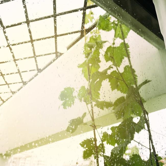 Khu vườn trên sân thượng nhỏ nhắn nhưng xanh mát mắt của bà mẹ hai con xinh đẹp Elly Trần - Ảnh 4.