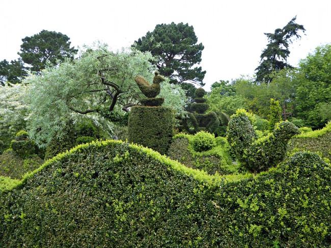 Người phụ nữ 70 tuổi biến ngôi nhà bỏ hoang thành khu vườn xinh đẹp nhờ tình yêu thiên nhiên - Ảnh 2.
