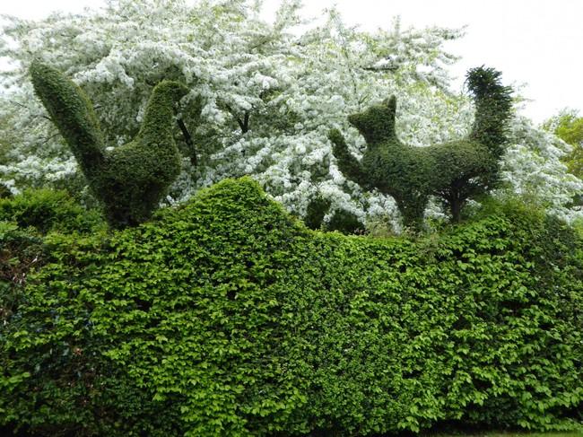 Người phụ nữ 70 tuổi biến ngôi nhà bỏ hoang thành khu vườn xinh đẹp nhờ tình yêu thiên nhiên - Ảnh 4.