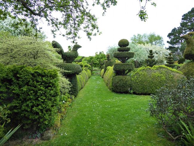 Người phụ nữ 70 tuổi biến ngôi nhà bỏ hoang thành khu vườn xinh đẹp nhờ tình yêu thiên nhiên - Ảnh 5.