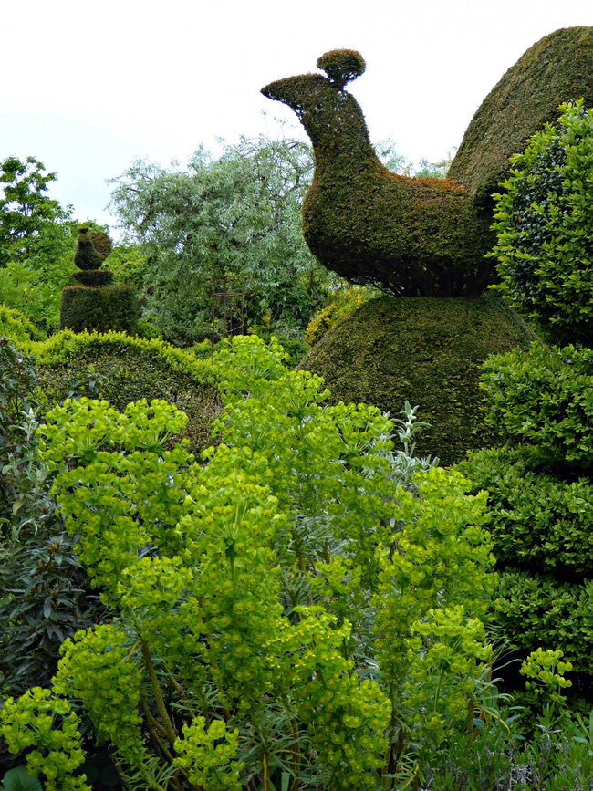 Người phụ nữ 70 tuổi biến ngôi nhà bỏ hoang thành khu vườn xinh đẹp nhờ tình yêu thiên nhiên - Ảnh 7.
