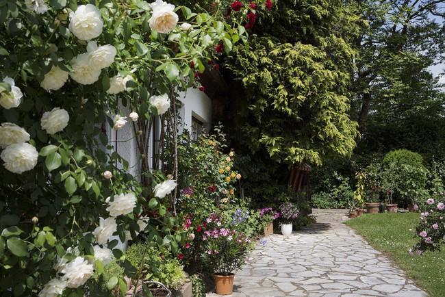 Ngôi nhà vườn ngập nắng rực rỡ sắc hoa nhìn thôi cũng đủ thấy lòng bình yên - Ảnh 2.