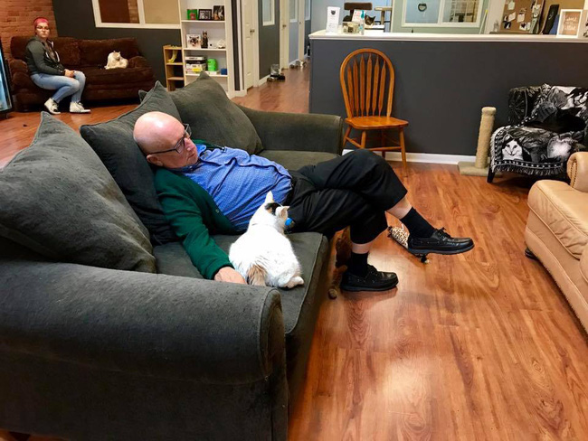 Đăng ảnh tình nguyện viên nằm ngủ say sưa cùng mèo, khu bảo trợ thú cưng nhận 1000 lượt truy cập mỗi phút, tiền tài trợ đủ cho cả năm - Ảnh 5.