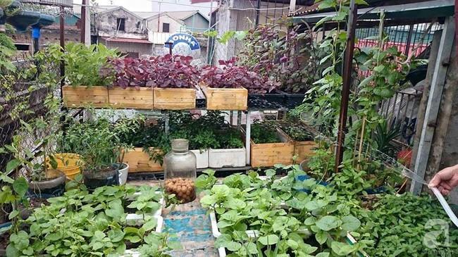 Khu vườn trên sân thượng 45m² nhưng có giàn bầu và mướp quả to đến bất ngờ của bà mẹ hai con ở Hà Nội - Ảnh 4.