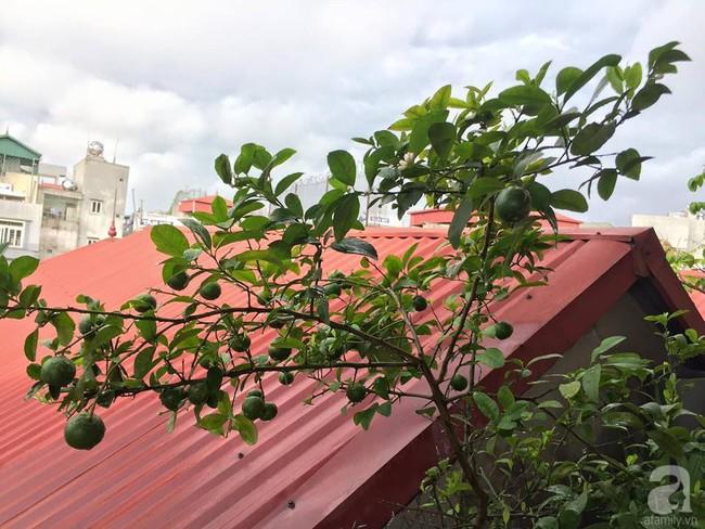Khu vườn trên sân thượng 45m² nhưng có giàn bầu và mướp quả to đến bất ngờ của bà mẹ hai con ở Hà Nội - Ảnh 24.