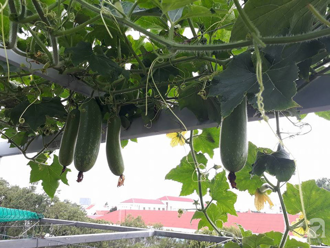 Khu vườn sân thượng tuy nhỏ nhưng bạt ngàn rau sạch của người chồng dồn sức chăm bón cho vợ con ở Vũng Tàu - Ảnh 19.