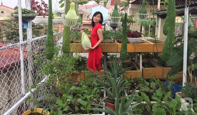 Khu vườn trên sân thượng 45m² nhưng có giàn bầu và mướp quả to đến bất ngờ của bà mẹ hai con ở Hà Nội - Ảnh 3.