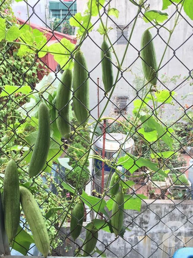 Khu vườn trên sân thượng 45m² nhưng có giàn bầu và mướp quả to đến bất ngờ của bà mẹ hai con ở Hà Nội - Ảnh 16.
