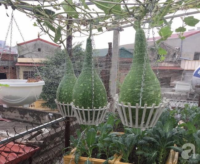 Khu vườn trên sân thượng 45m² nhưng có giàn bầu và mướp quả to đến bất ngờ của bà mẹ hai con ở Hà Nội - Ảnh 8.