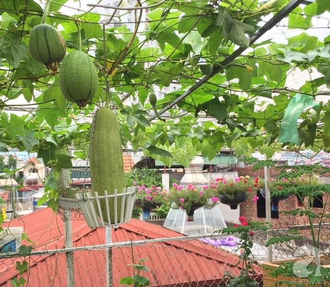 Khu vườn trên sân thượng 45m² nhưng có giàn bầu và mướp quả to đến bất ngờ của bà mẹ hai con ở Hà Nội - Ảnh 7.