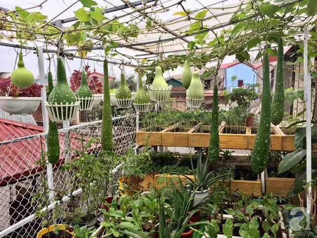 Khu vườn trên sân thượng 45m² nhưng có giàn bầu và mướp quả to đến bất ngờ của bà mẹ hai con ở Hà Nội - Ảnh 6.