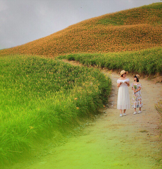 Dù ở vùng hẻo lánh, rừng hoa kim châm đẹp mê hồn ở Đài Loan vẫn cực hút khách, tháng 9 này bạn nên đi ngay kẻo lỡ - Ảnh 5.