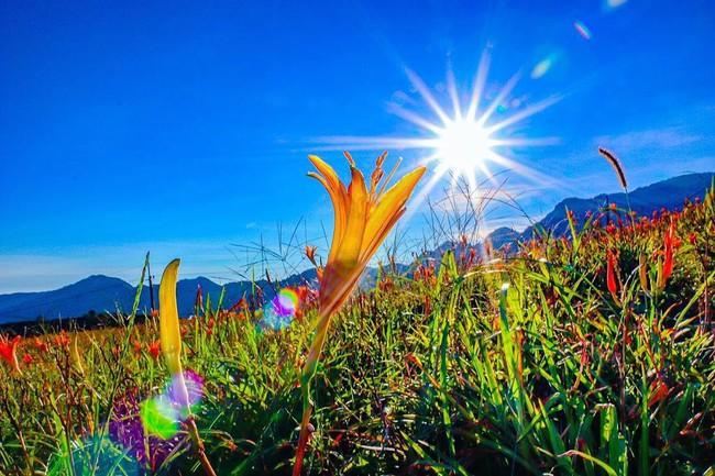 Dù ở vùng hẻo lánh, rừng hoa kim châm đẹp mê hồn ở Đài Loan vẫn cực hút khách, tháng 9 này bạn nên đi ngay kẻo lỡ - Ảnh 6.
