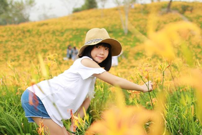 Dù ở vùng hẻo lánh, rừng hoa kim châm đẹp mê hồn ở Đài Loan vẫn cực hút khách, tháng 9 này bạn nên đi ngay kẻo lỡ - Ảnh 1.
