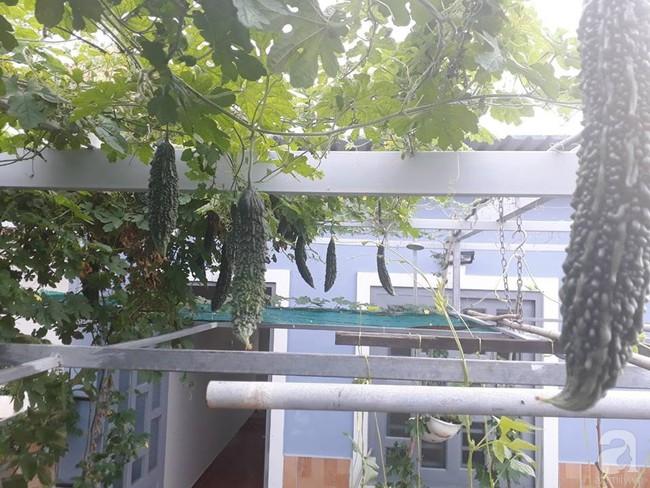 Khu vườn sân thượng tuy nhỏ nhưng bạt ngàn rau sạch của người chồng dồn sức chăm bón cho vợ con ở Vũng Tàu - Ảnh 4.