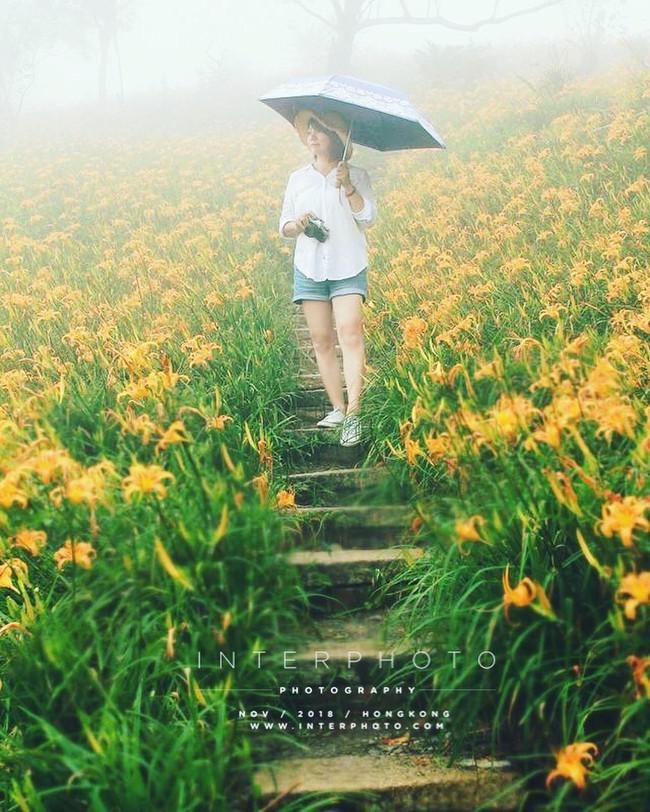 Dù ở vùng hẻo lánh, rừng hoa kim châm đẹp mê hồn ở Đài Loan vẫn cực hút khách, tháng 9 này bạn nên đi ngay kẻo lỡ - Ảnh 7.