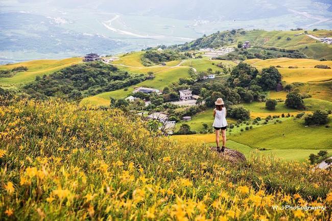 Dù ở vùng hẻo lánh, rừng hoa kim châm đẹp mê hồn ở Đài Loan vẫn cực hút khách, tháng 9 này bạn nên đi ngay kẻo lỡ - Ảnh 2.