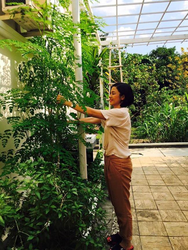 Người đẹp Tây Đô Việt Trinh và ngôi nhà an yên bên khu vườn ngập tràn rau trái - Ảnh 5.