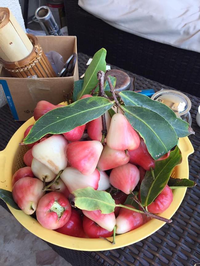 Khu vườn đủ các loại cây quả mang hương vị quê nhà của ca sĩ Bằng Kiều ở Mỹ - Ảnh 11.