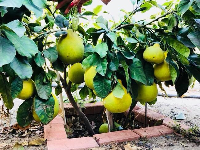 Khu vườn đủ các loại cây quả mang hương vị quê nhà của ca sĩ Bằng Kiều ở Mỹ - Ảnh 10.