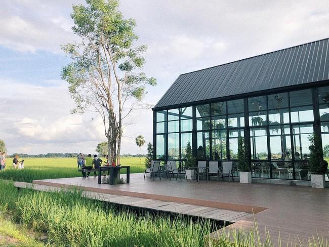 Quán cà phê rộng 30ha, view ruộng lúa bao la xanh ngát ở Thái Lan đang gây sốt rần rần - Ảnh 9.