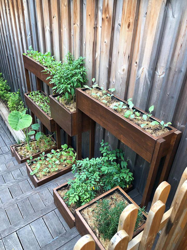 Khu vườn nhỏ xanh mát với rau sạch và hoa hồng trong biệt thự triệu đô của Tăng Thanh Hà - Ảnh 11.