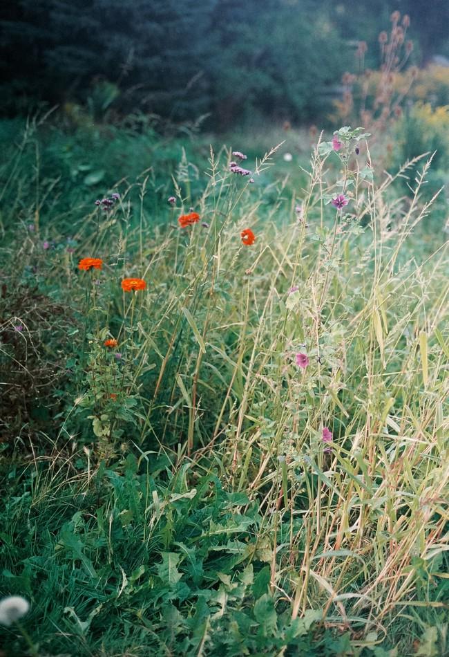 Thăm khu vườn bình yên bên hoa lá rộng 25.000m² và ngôi nhà bình dị của cô gái độc thân ở vùng nông thôn  - Ảnh 2.