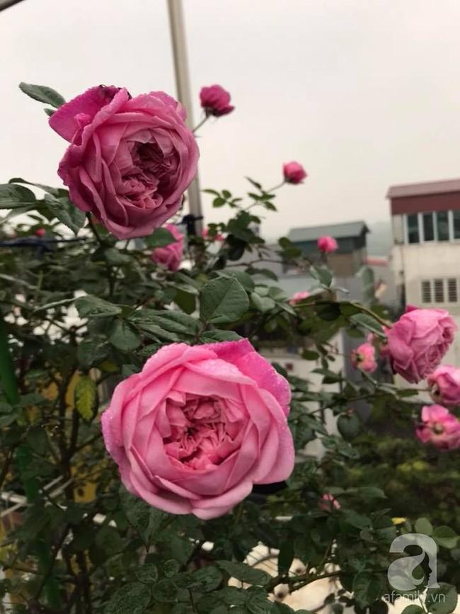 Người phụ nữ tận hưởng hạnh phúc trọn vẹn bên vườn hồng trên cao giữa lòng Hà Nội - Ảnh 10.
