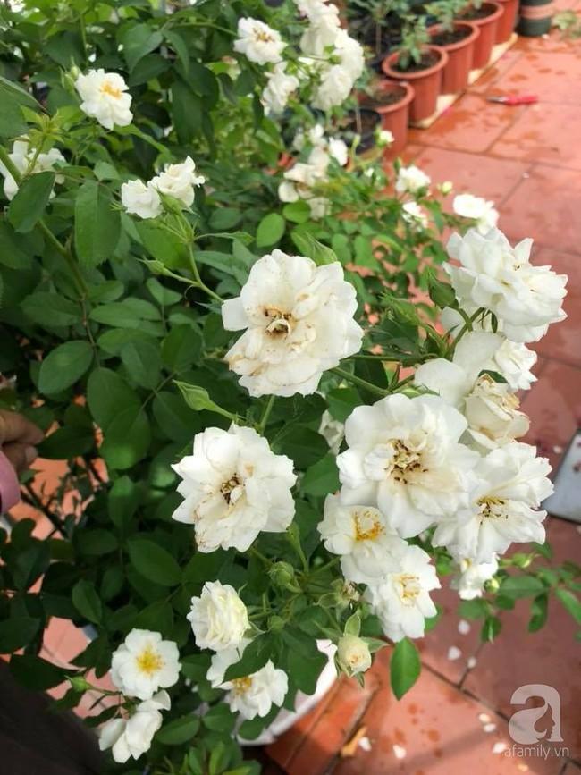 Người phụ nữ tận hưởng hạnh phúc trọn vẹn bên vườn hồng trên cao giữa lòng Hà Nội - Ảnh 8.