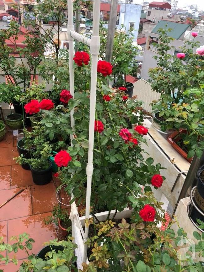 Người phụ nữ tận hưởng hạnh phúc trọn vẹn bên vườn hồng trên cao giữa lòng Hà Nội - Ảnh 4.