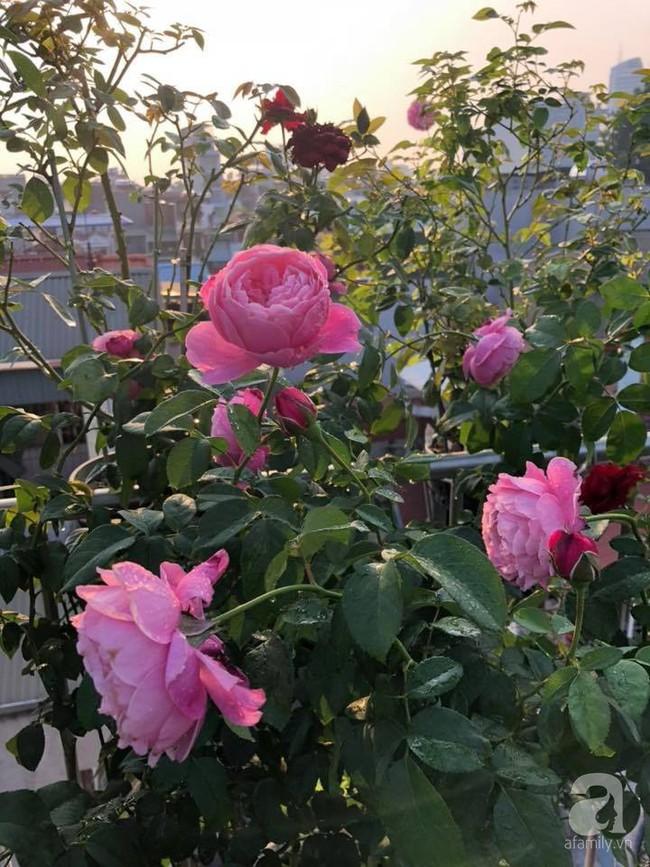 Người phụ nữ tận hưởng hạnh phúc trọn vẹn bên vườn hồng trên cao giữa lòng Hà Nội - Ảnh 18.