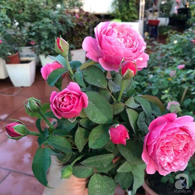 Người phụ nữ tận hưởng hạnh phúc trọn vẹn bên vườn hồng trên cao giữa lòng Hà Nội - Ảnh 17.