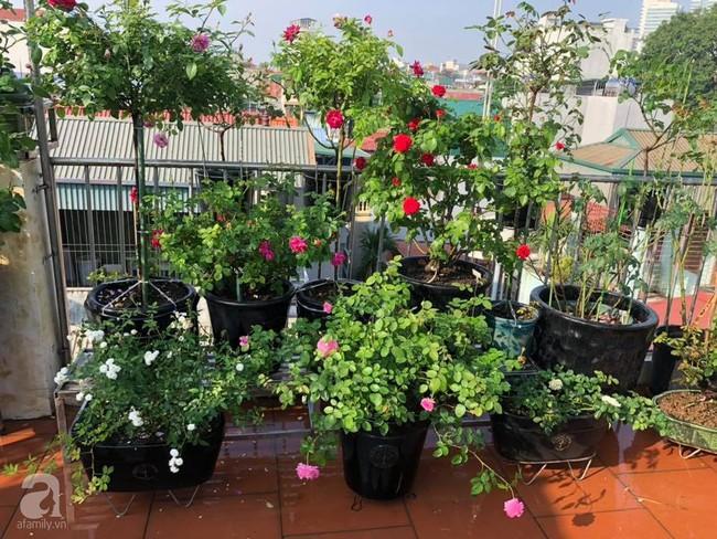 Người phụ nữ tận hưởng hạnh phúc trọn vẹn bên vườn hồng trên cao giữa lòng Hà Nội - Ảnh 15.
